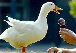 Obama duck