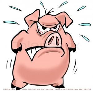 angry pig 1
