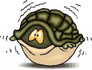 Fearful turtle