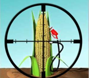 corn last
