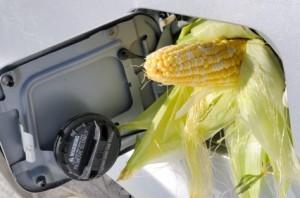 corn lead