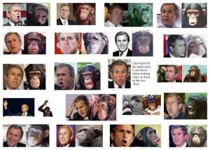 Bush Chimp