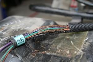 mice eating wiring pic
