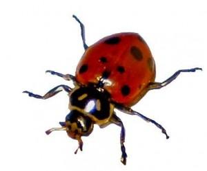 bug pic