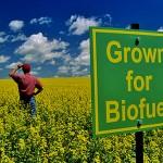 biofuel 3