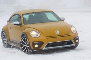 '17 Beetle in snow